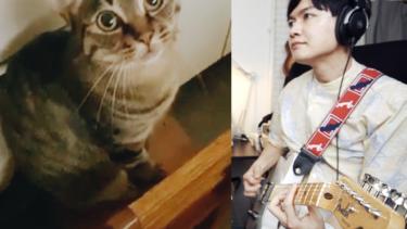 猫の鳴き声とのコラボ演奏をしました。